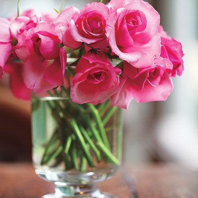 fresh pink roses