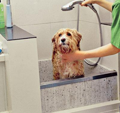 Large tub in canine (dog) washing station