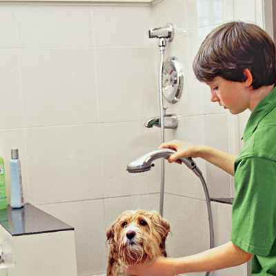 Dog washing station sprayer shower