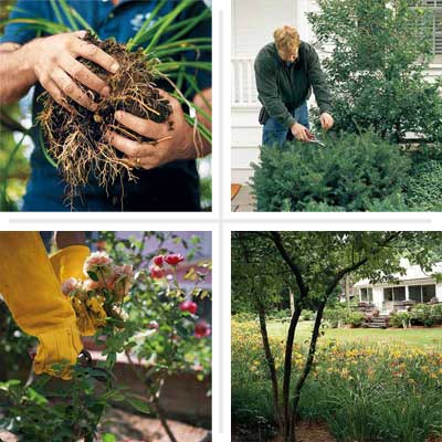 Don't Be Afraid to Make the Cut when dividing and pruning plants