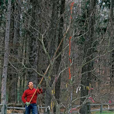 How to Prune Small Ornamental Trees when dividing and pruning plants