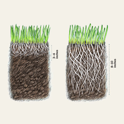 grass root growth comparison of synthetic soil versus organic soil 