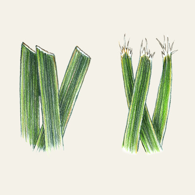 grass comparison of cutting yard with lawnmower sharp blade versus dull blade illustration