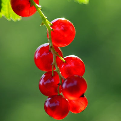 brightly-lit berries