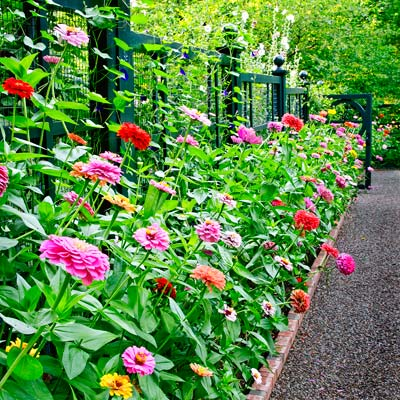 an array of different colored flowers along a garden pathway