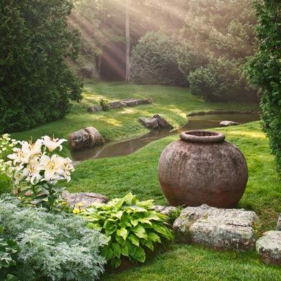 a lush garden shot at dawn's first light