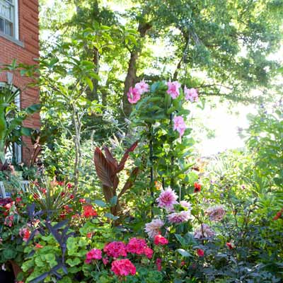 colorful flowers and shady trees in backyard