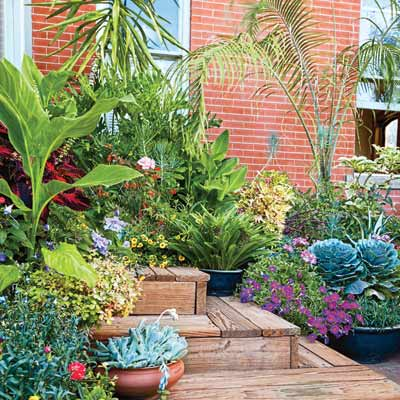 blue-leaved succulents and ornamental kale mix with flowering petunias and other plants, including a palm, on steps