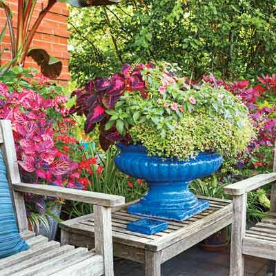 patio planters in cobalt blue with begonias and other flowers in pink and magenta
