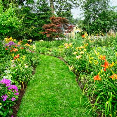 layered perennial bed with 'David's Lavender' phlox, 'Little Goldstar' black-eyed Susans, 'Party Queen' and 'Chicago Rosy' daylilies.