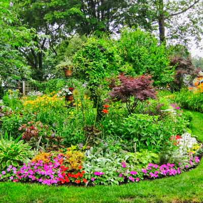 path with hot pink, crimson, and white impatiens and foliage plants, hosta 'Minuteman', and lambs' ears, rudbeckia, oriental lilies, a weeping vine, a Japanese maple