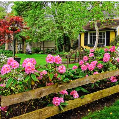 garden house with 'Scintillation' rhododendron, 'Delaware Valley White' azalea, and 'Bloodgood' Japanese maple