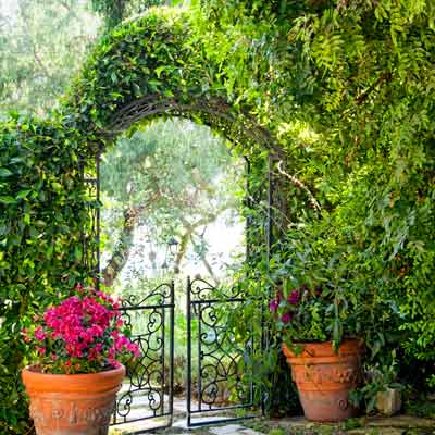 wisteria-draped arbor with container plants