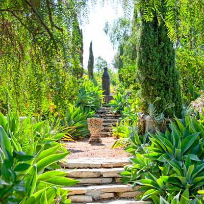 garden steps with fountain, Italian cypresses and Agave attenuate