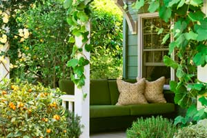 cottage garden with climbing roses, leafy grapevines climbing porch posts, pots of kumquat and rosemary