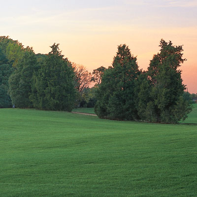 lawn and trees with sunset