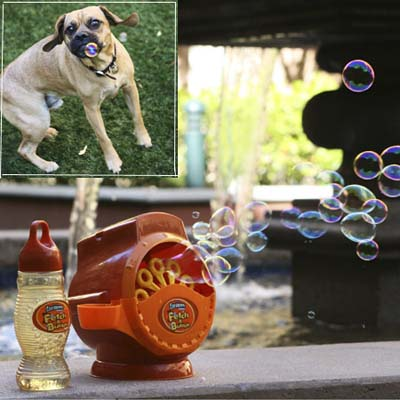 bubble blowing machine which fires chicken scent bubbles