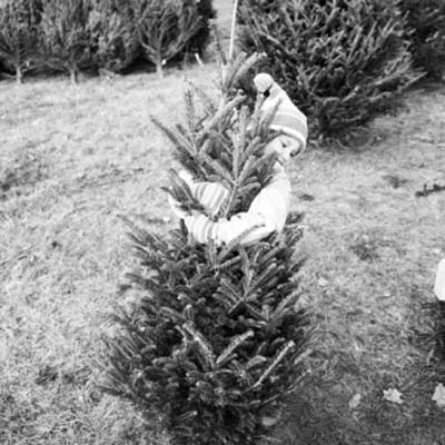little girl hugging christmas tree