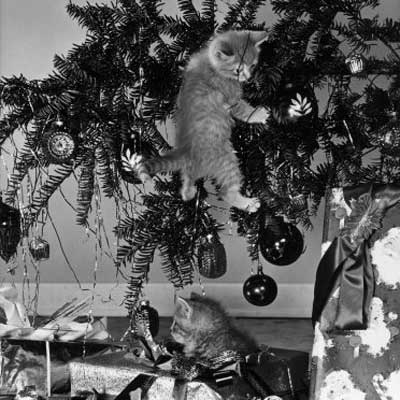 vintage christmas photograph of two cats toppling a christmas tree
