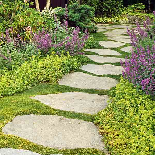 garden with ground cover between stepping stones bordered by chartreuse sedum and catmint