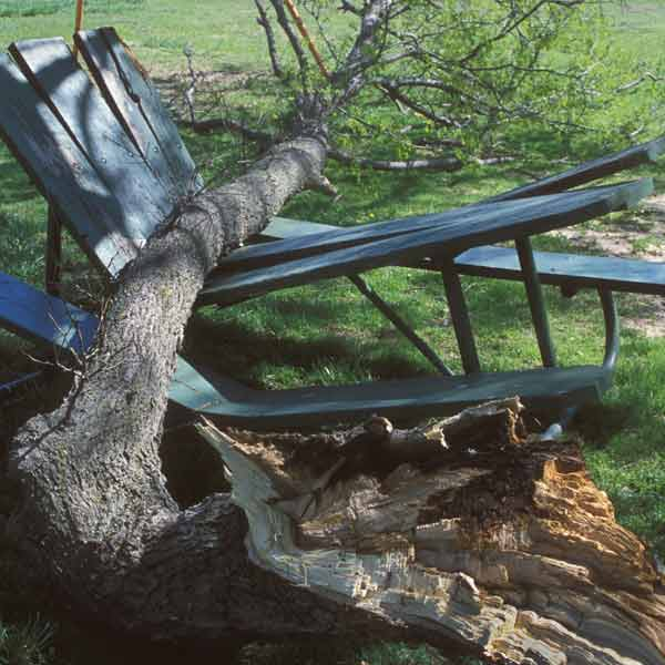 tree fallen on picnic table, homeowner survival skills
