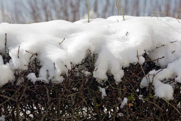 tree branch full of snow, homeowner survival skills