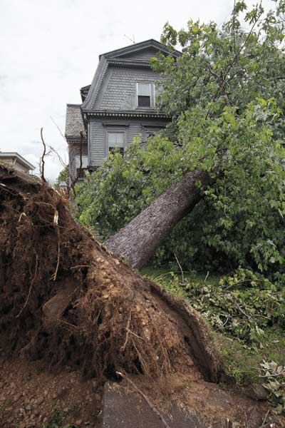 tree fallen on house, holiday disaster