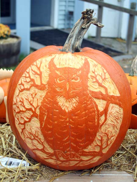 Great Horned Owl from the 2013 Pumpkin Carving Contest