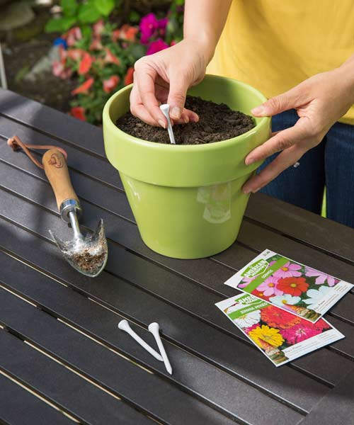 using golf tee to help sow seeds in containers