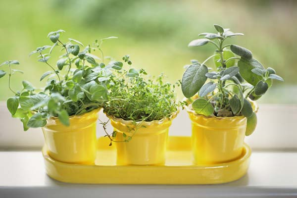 plant heat loving herbs, june fast fixes for upkeep