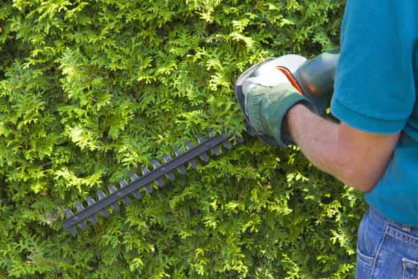 trim everygreen trees in yard, easy july home upgrades