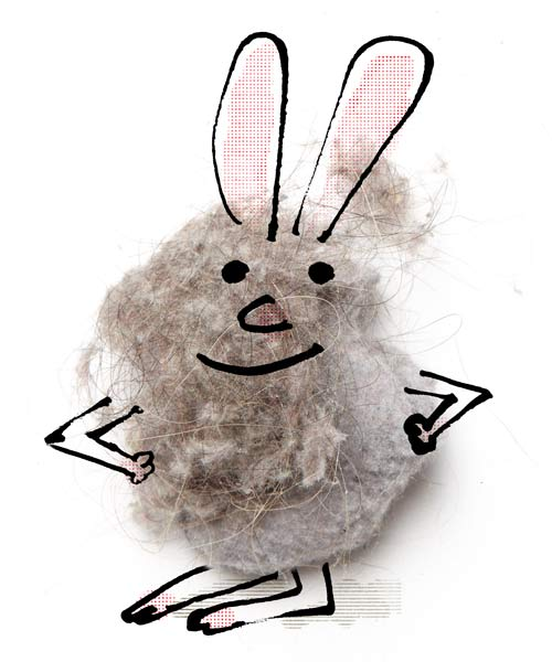 Dust Bunnies Anatomy Bunny Old House