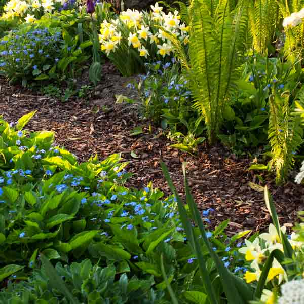 garden scene with mulch bed, picking the right mulch type