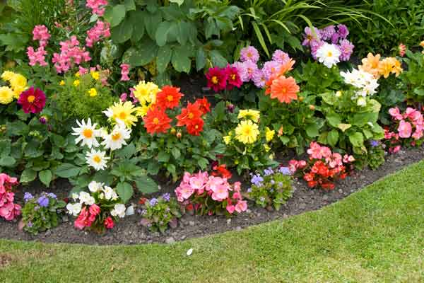 flower bed edge, 10 uses for lattice