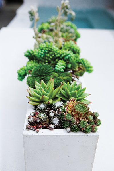 Succulents are a natural easy care low water container for Easy care outdoor plants