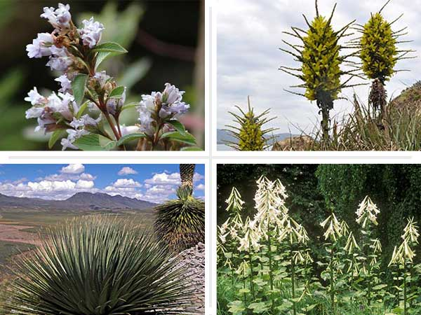 composite showing four examples of plants that take up to a decade or more to bloom