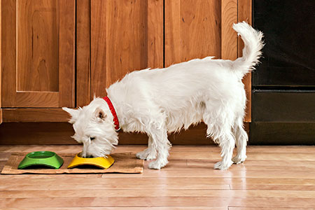 dog eating on a wood floor