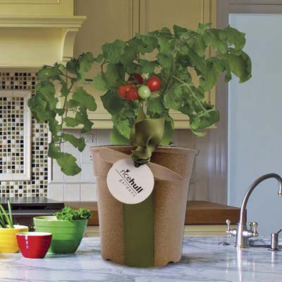 heirloom tomato plant kit