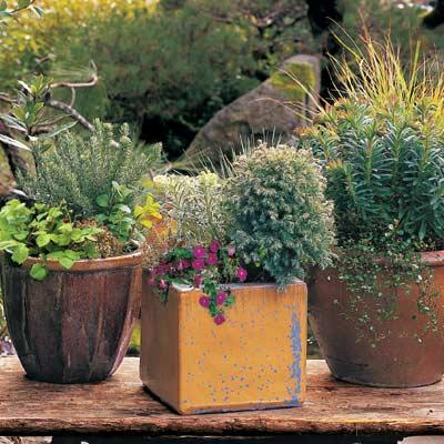 3 plants in pots