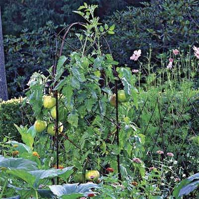 reinforce framework for tomatoes