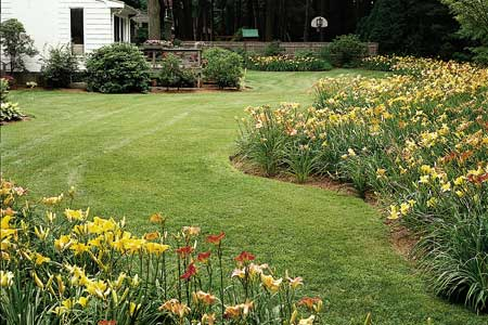 How To Divide Daylilies