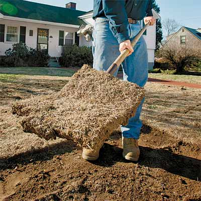 Remove The Grass How To Rejuvenate A Dying Lawn This