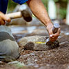 cutting stones for building a fieldstone wall 