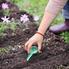decide to start seeds indoors or outdoors, step by step for how to start seeds