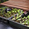 giving seedlings enough light, step by step for how to start seeds