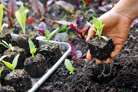 How To Start Plant And Vegetable Seeds This Old House