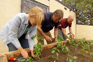 Roger Cook helps a homeowner build and plant a raised-bed chili-pepper garden